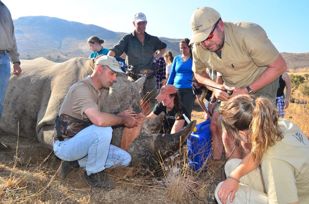 Group taking part in Rhino notching with rangers.